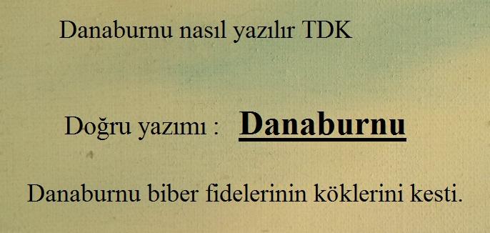 Danaburnu nasıl yazılır TDK